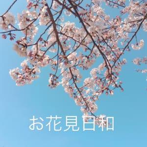 お花見日和!