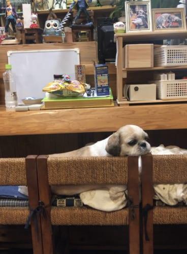 居酒屋に犬
